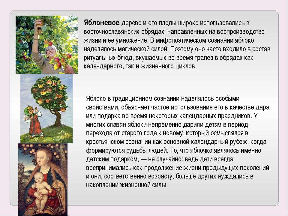 Яблоневое дерево и его плоды широко использовались в восточнославянских обряд...