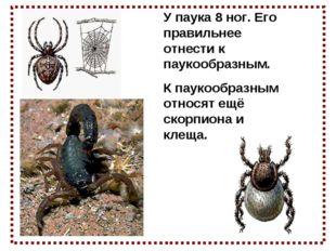 У паука 8 ног. Его правильнее отнести к паукообразным. К паукообразным относя