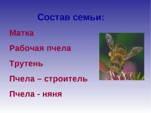 Состав семьи: Матка Рабочая пчела Трутень Пчела – строитель Пчела - няня