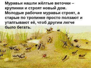 Муравьи нашли жёлтые веточки – крупинки и строят новый дом. Молодые рабочие м