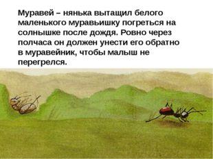 Муравей – нянька вытащил белого маленького муравьишку погреться на солнышке п