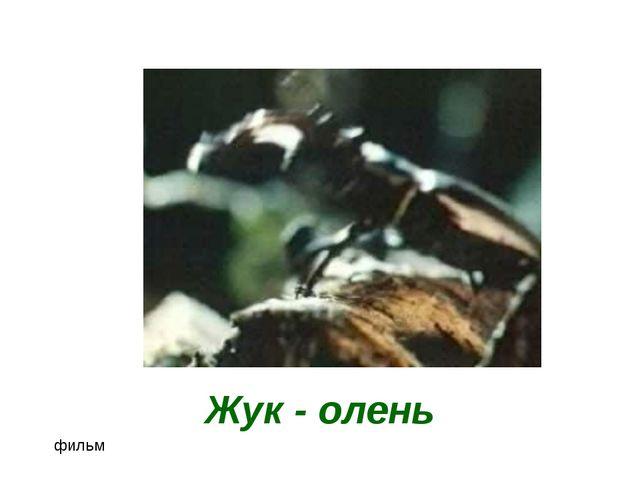 Жук - олень фильм