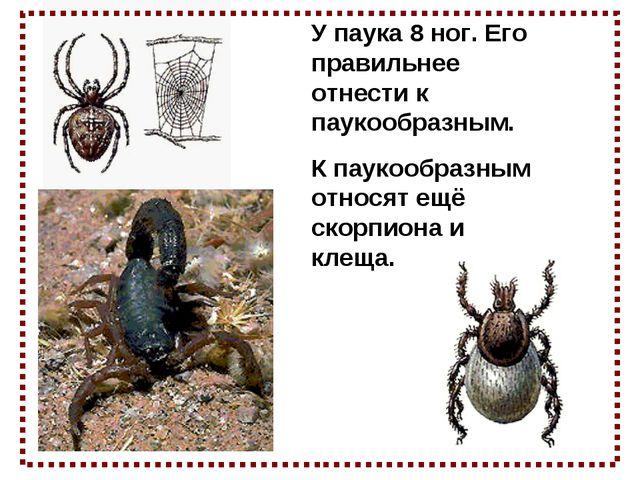 У паука 8 ног. Его правильнее отнести к паукообразным. К паукообразным относя...
