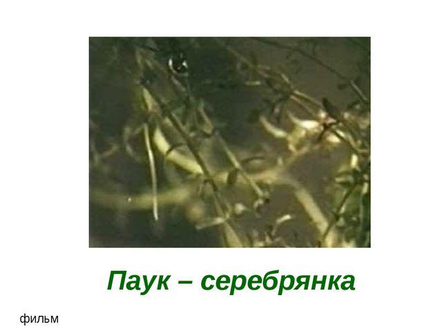Паук – серебрянка фильм