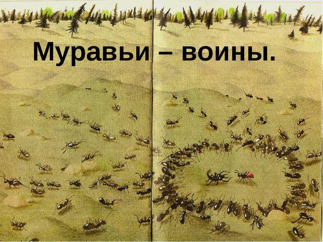 Муравьи – воины.