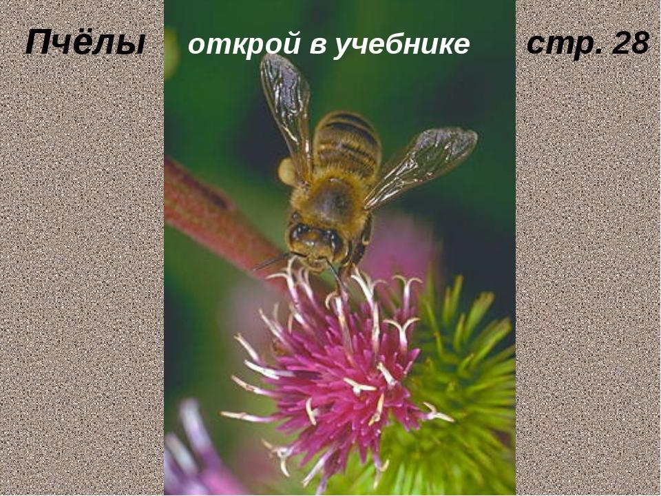 Пчёлы открой в учебнике стр. 28