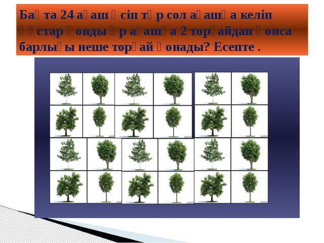 Бақта 24 ағаш өсіп тұр сол ағашқа келіп құстар қонды әр ағашқа 2 торғайдан қ...
