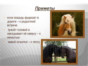 Приметы если лошадь фыркает в дороге – к радостной встрече трясёт головой и з