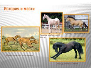 История и масти Лошадь саврасовой масти Лошадь изабелловой масти Лошадь ворон