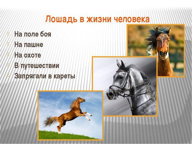 Лошадь в жизни человека На поле боя На пашне На охоте В путешествии Запрягали...