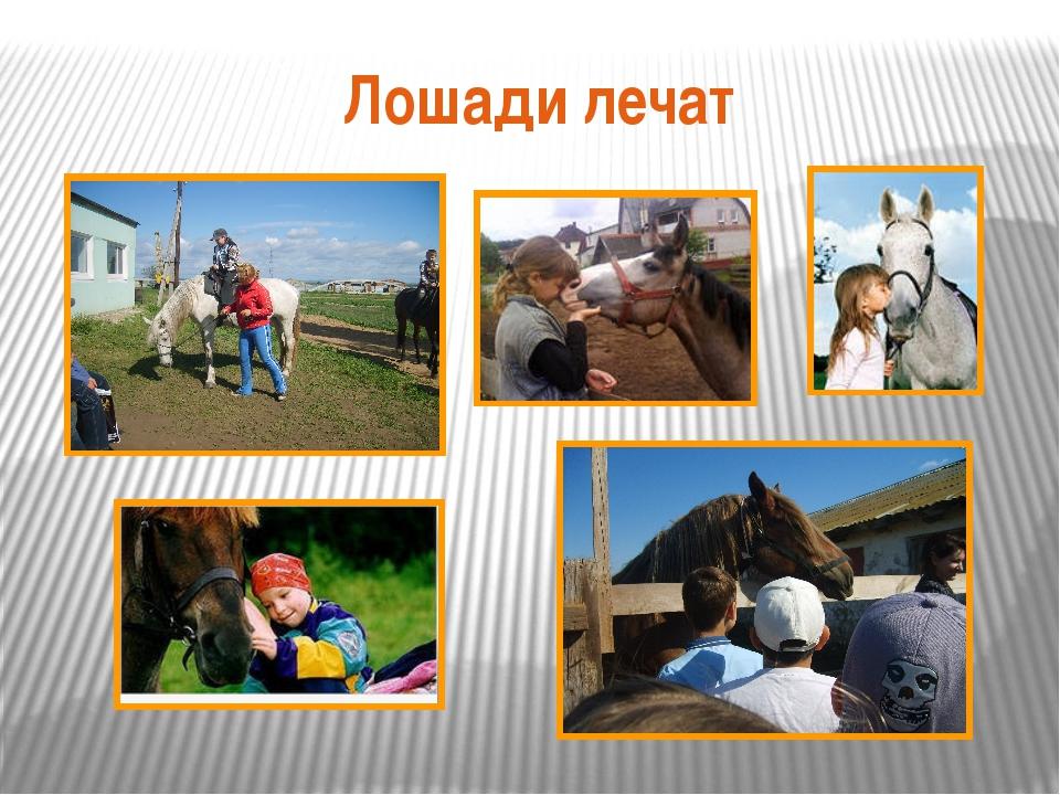 Лошади лечат