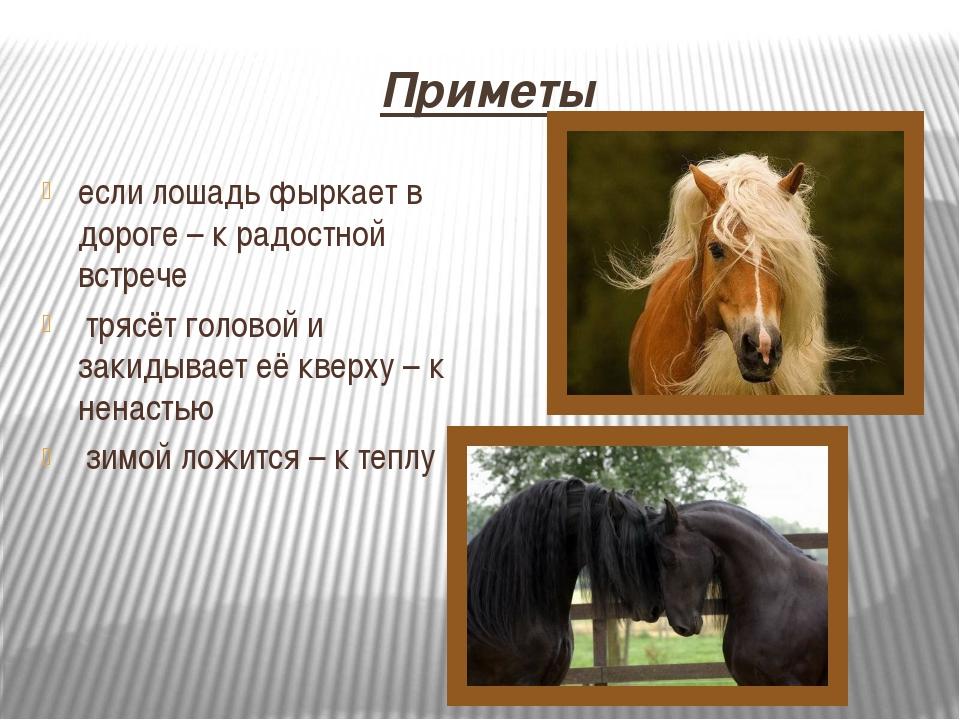 Приметы если лошадь фыркает в дороге – к радостной встрече трясёт головой и з...