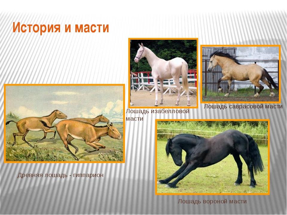 История и масти Лошадь саврасовой масти Лошадь изабелловой масти Лошадь ворон...