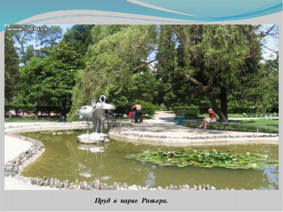 Пруд в парке Ривьера. В парке «Ривьера» рядом с Поляной Дружбы расположен неб...