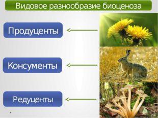 Видовое разнообразие биоценоза Продуценты Консументы Редуценты