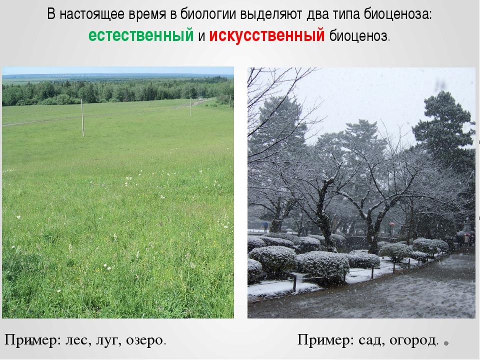 В настоящее время в биологии выделяют два типа биоценоза: естественный и иску...