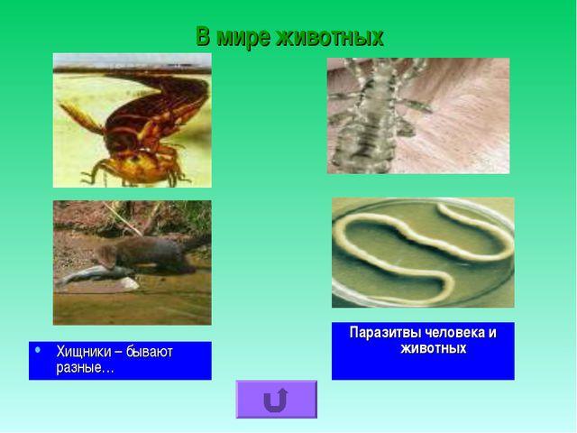 В мире животных Паразитвы человека и животных Хищники – бывают разные…
