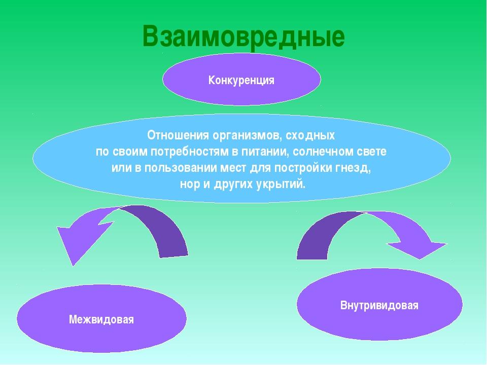 Взаимовредные Конкуренция Межвидовая Внутривидовая Отношения организмов, сход...