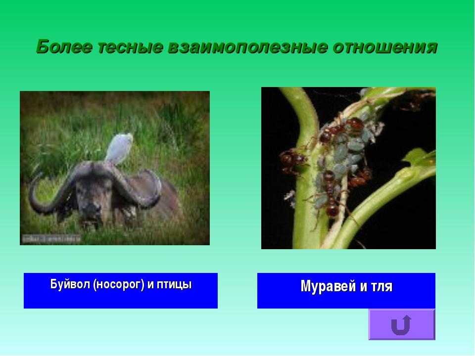 Более тесные взаимополезные отношения Буйвол (носорог) и птицы Муравей и тля