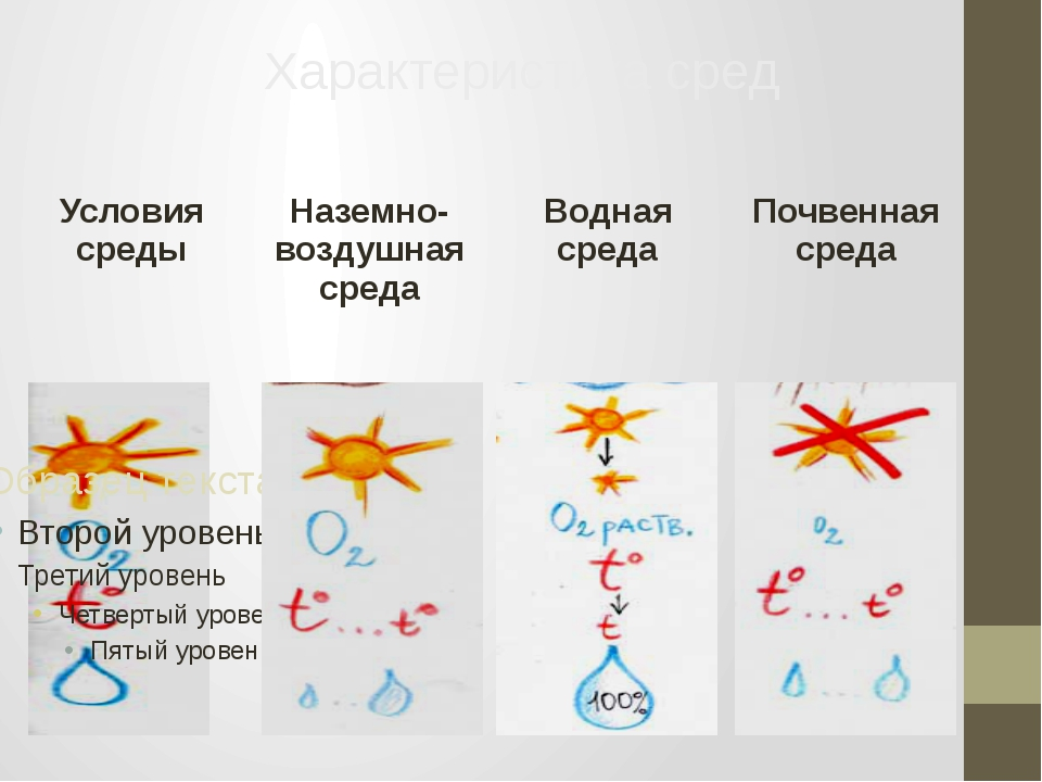 Характеристика сред Условия среды Наземно-воздушная среда Водная среда Почве...