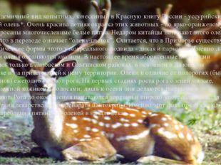 Другой эндемичный вид копытных, занесенный в Красную книгу России - уссурийск