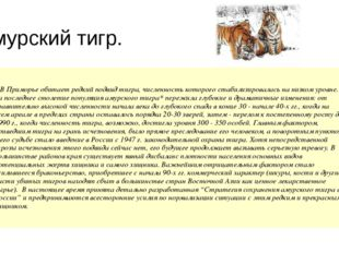 Амурский тигр. В Приморье обитает редкий подвид тигра, численность которог