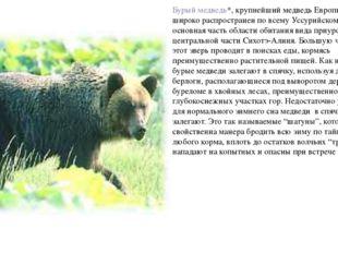 Бурый медведь*, крупнейший медведь Европы и Азии, широко распространен по все