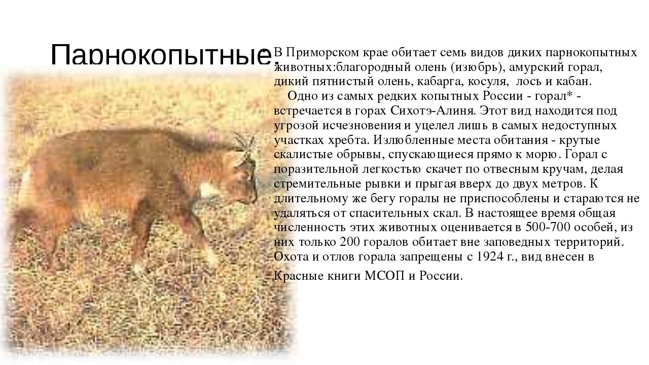 Парнокопытные. В Приморском крае обитает семь видов диких парнокопытных живот...
