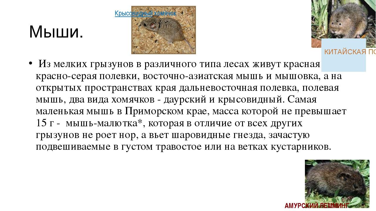 Мыши. Из мелких грызунов в различного типа лесах живут красная и красно-сера...