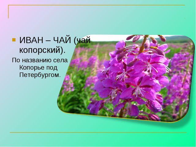 ИВАН – ЧАЙ (чай копорский). По названию села Копорье под Петербургом.
