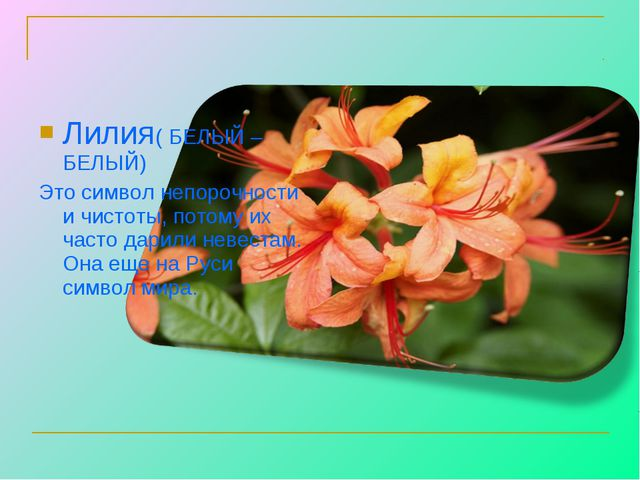 Лилия( БЕЛЫЙ – БЕЛЫЙ) Это символ непорочности и чистоты, потому их часто дари...