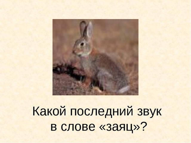 Какой последний звук в слове «заяц»?