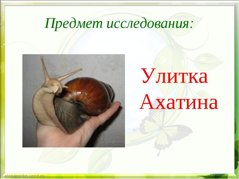 Предмет исследования: Улитка Ахатина