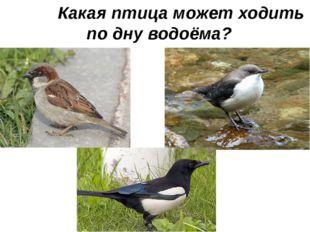 Какая птица может ходить по дну водоёма?