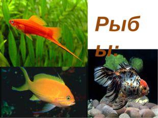 Рыбы: