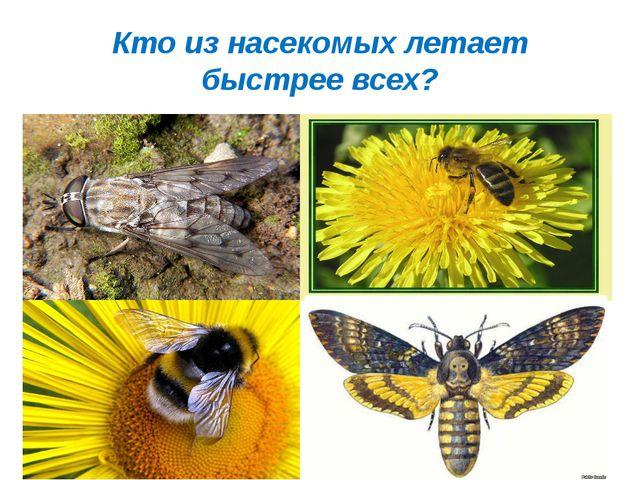 Кто из насекомых летает быстрее всех?