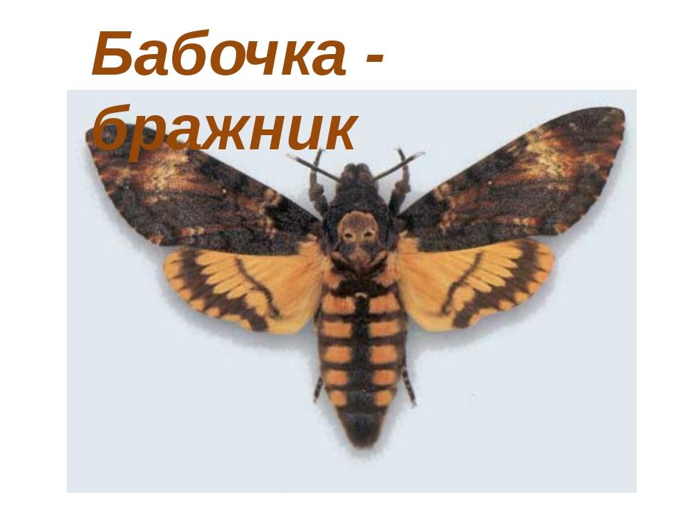 Бабочка - бражник