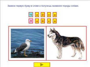 И Б Замени первую букву в слове и получишь название породы собаки. Г Р У Н К