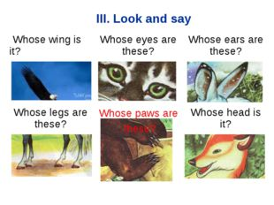 III. Look and say Whose paws are these? Whose wing is it?Whose eyes are thes