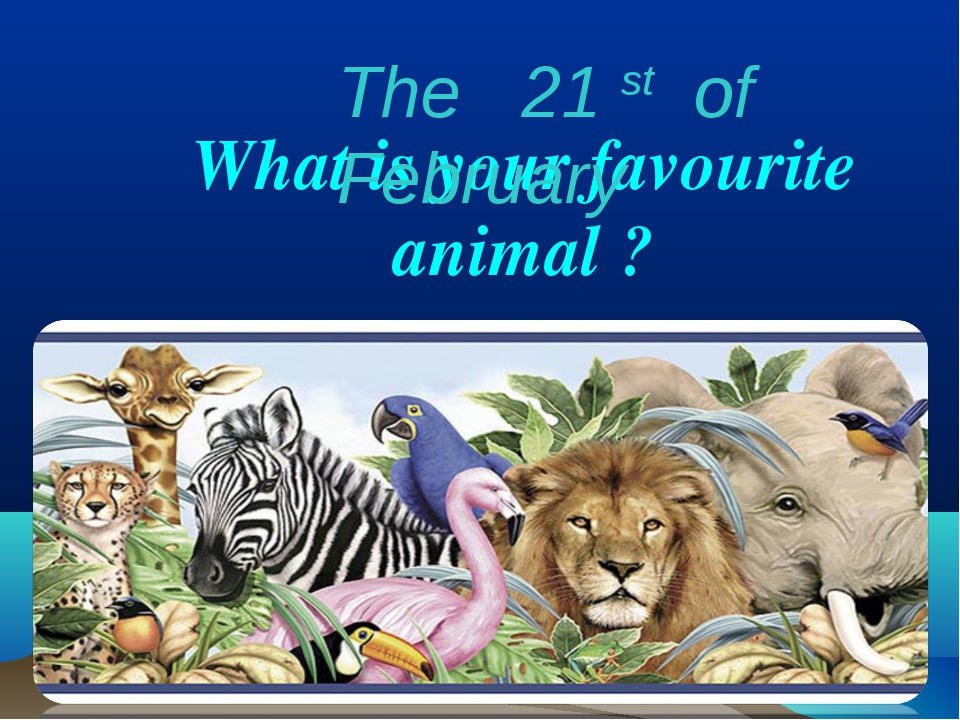 What is your favourite animal ? The 21 st of February