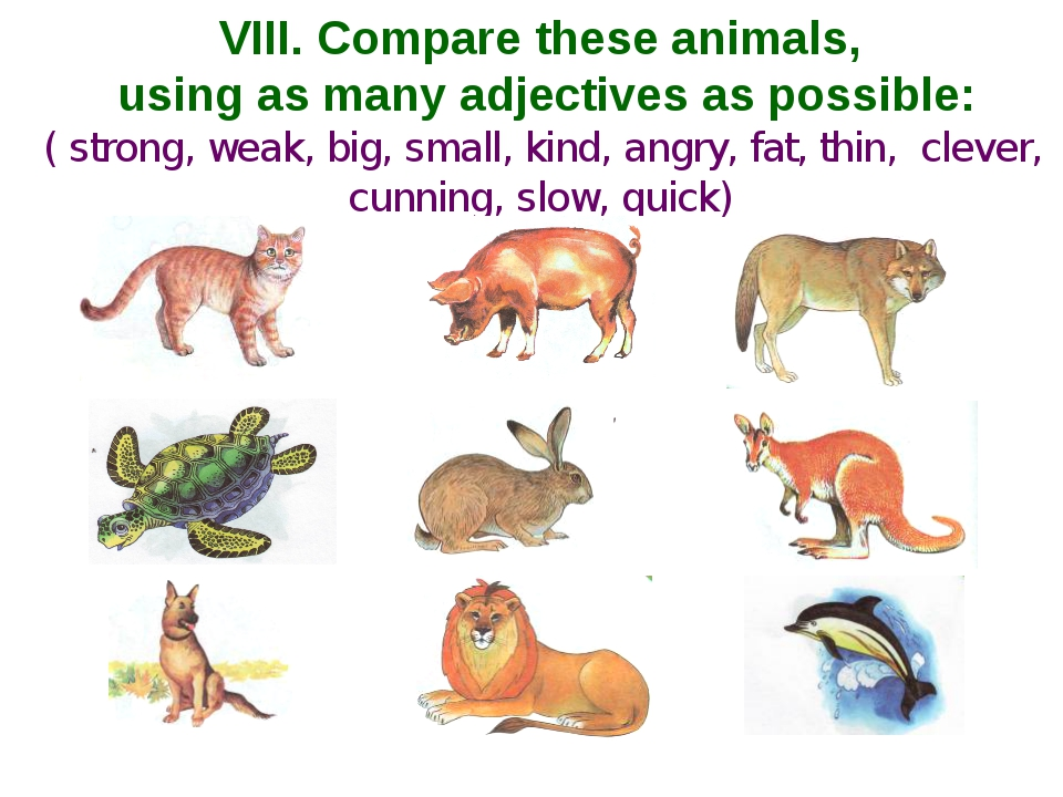 VIII. Compare these animals, using as many adjectives as possible: ( strong,...
