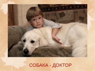 СОБАКА - ДОКТОР