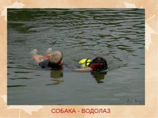 СОБАКА - ВОДОЛАЗ