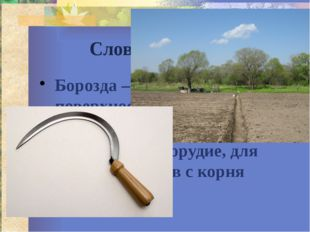 Словарная работа Борозда – канавка на поверхности почвы, для отвода воды Серп