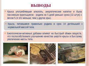 ВЫВОДЫ Крыса употреблявшая алкоголь, энергетические напитки и была пассивным