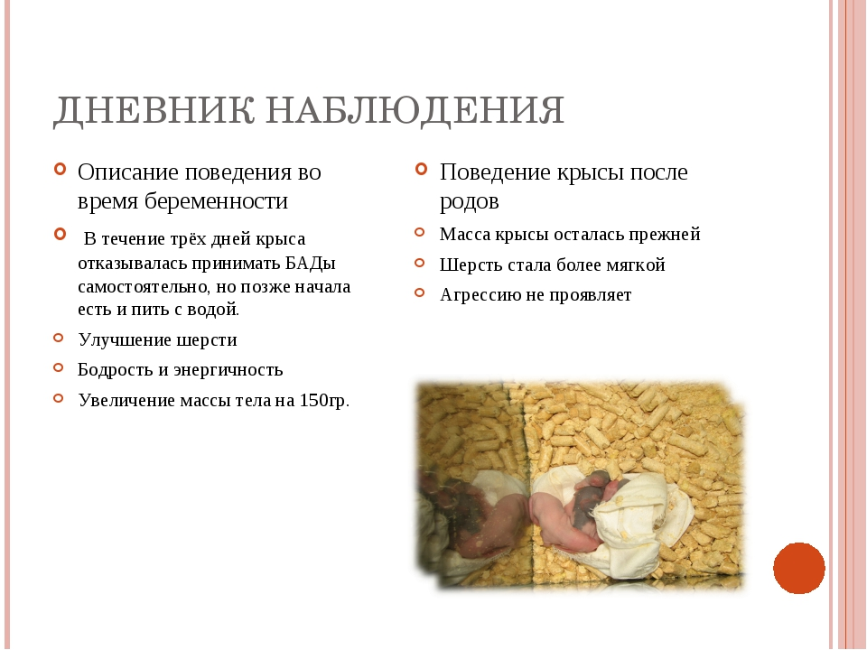 ДНЕВНИК НАБЛЮДЕНИЯ Описание поведения во время беременности В течение трёх дн...