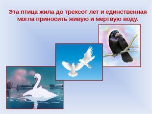 Эта птица жила до трехсот лет и единственная могла приносить живую и мертвую