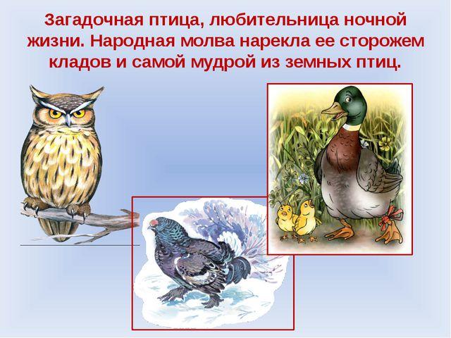 Загадочная птица, любительница ночной жизни. Народная молва нарекла ее сторож...