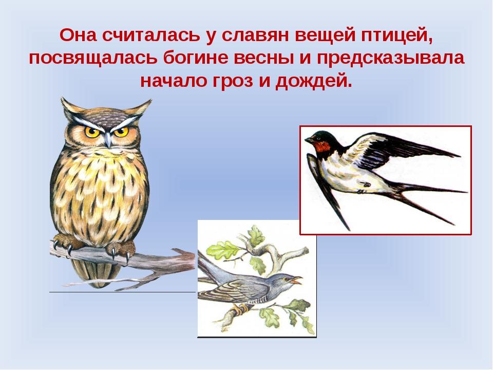 Она считалась у славян вещей птицей, посвящалась богине весны и предсказывала...