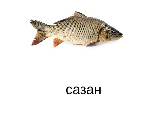 сазан